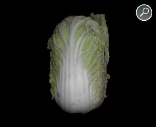 Brassica rapa - Κράμβη η ράπυς