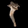 Κρατηρίσκος ο κερατόμορφος (Craterellus cornucopioides)