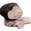 Οίδημα το μελανόσπορο - Tuber melanosporum