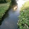 Πετασίτες στην  άκρη ποταμού